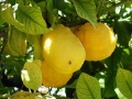 kepek_citrom-ciprus-utazas_1216629899